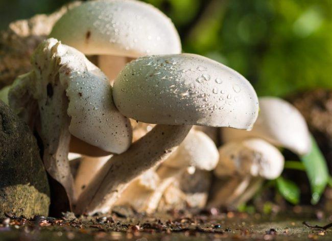 mushroom-372044_960_720 (Andere)