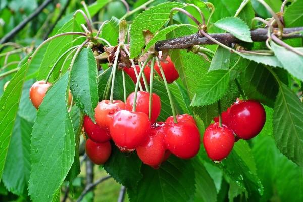 fruit-3394781_960_720
