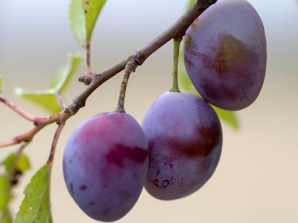 fruit-943382_960_720