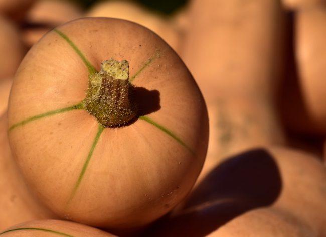 pumpkin-3717979_960_720