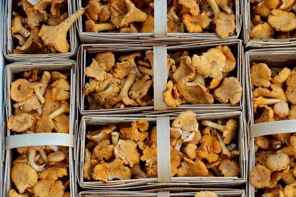mushrooms-1623893_960_720